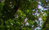DSC_9440_1.jpg