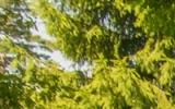 DSC_9489_1.jpg