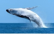 3/4 Whale there